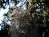 tn_20-geometrie-della-natura-marco-volpe