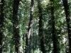 tn_27-martucci-cosimo-bosco-di-gravina-cat-presente-natura-gravina-2013