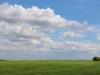 tn_55-campo-cat-presente-natura-ruvo-di-puglia-2014