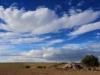 tn_6-castellano-enrico-il-trullo-cat-presente-natura-ruvo-di-puglia-2013