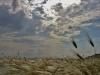 Stipa austroitalica (foto scattata nell'agro di Gravina in Puglia)