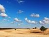tn_65-terra-di-murgia-cat-presente-natura-ruvo-di-puglia-2013